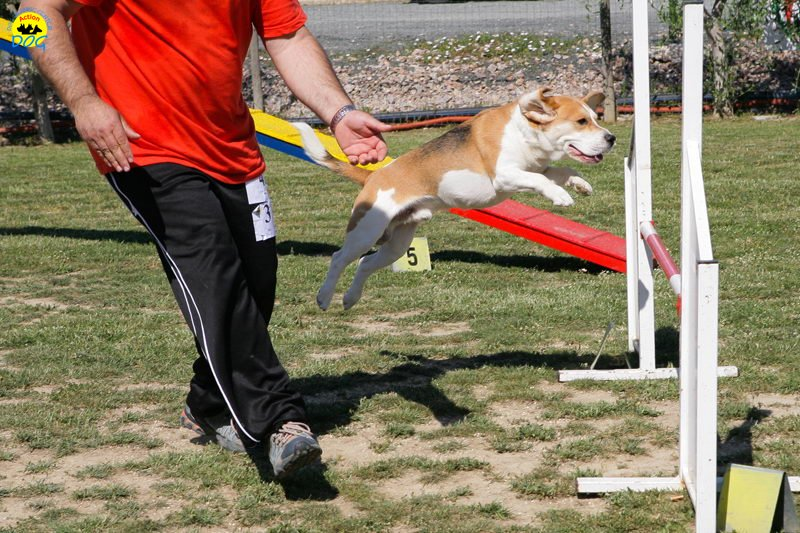 24-primo-trofeo-beagle-agility