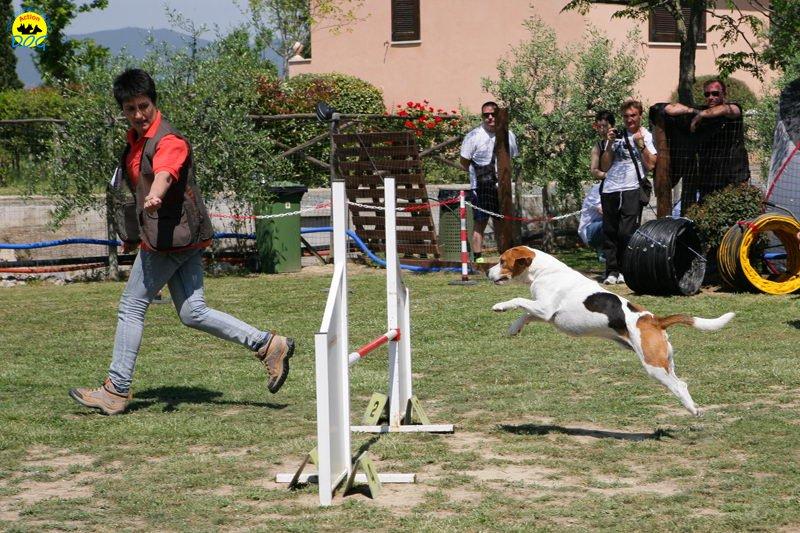 25-primo-trofeo-beagle-agility