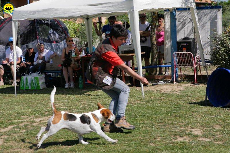 26-primo-trofeo-beagle-agility