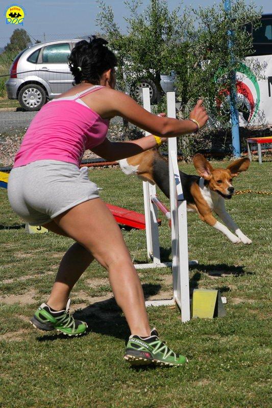 27-primo-trofeo-beagle-agility