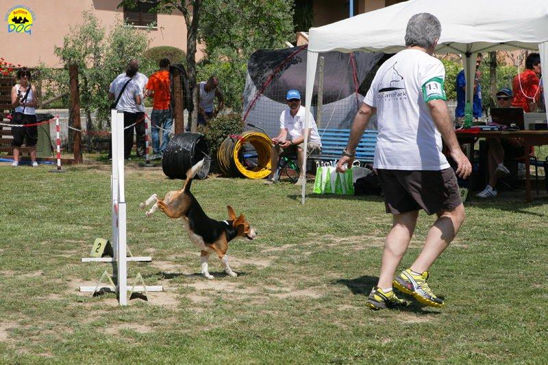29-primo-trofeo-beagle-agility
