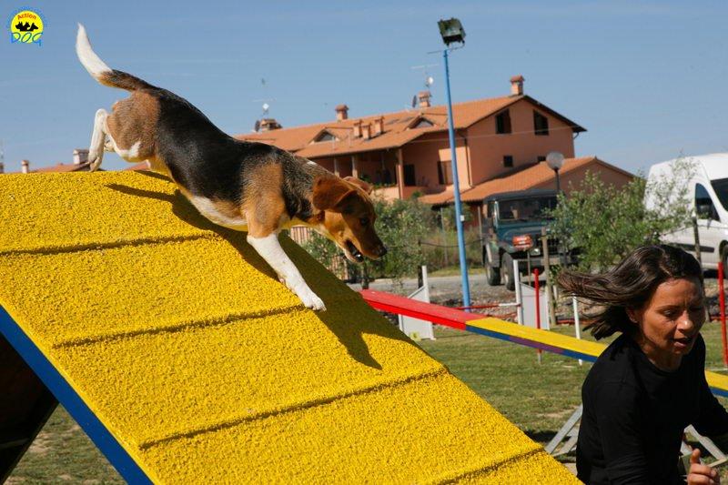 3-primo-trofeo-beagle-agility