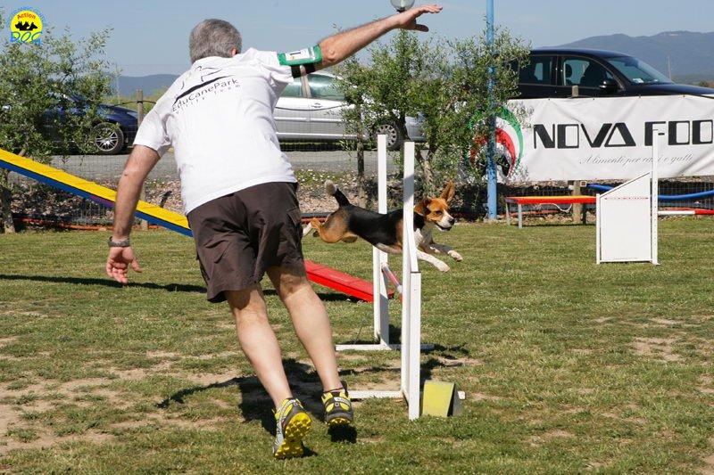30-primo-trofeo-beagle-agility