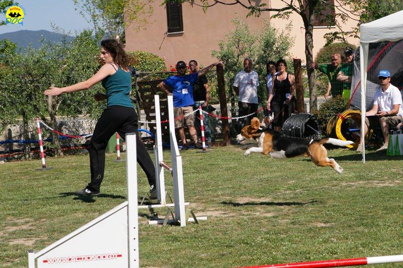 32-primo-trofeo-beagle-agility