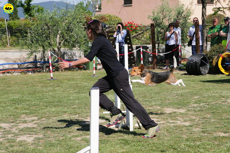 4-primo-trofeo-beagle-agility