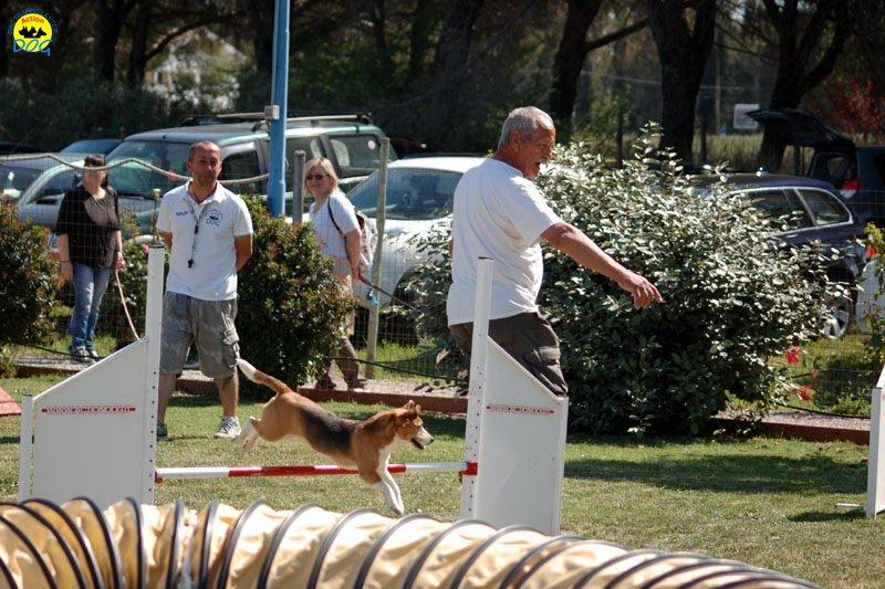 5-primo-trofeo-beagle-agility