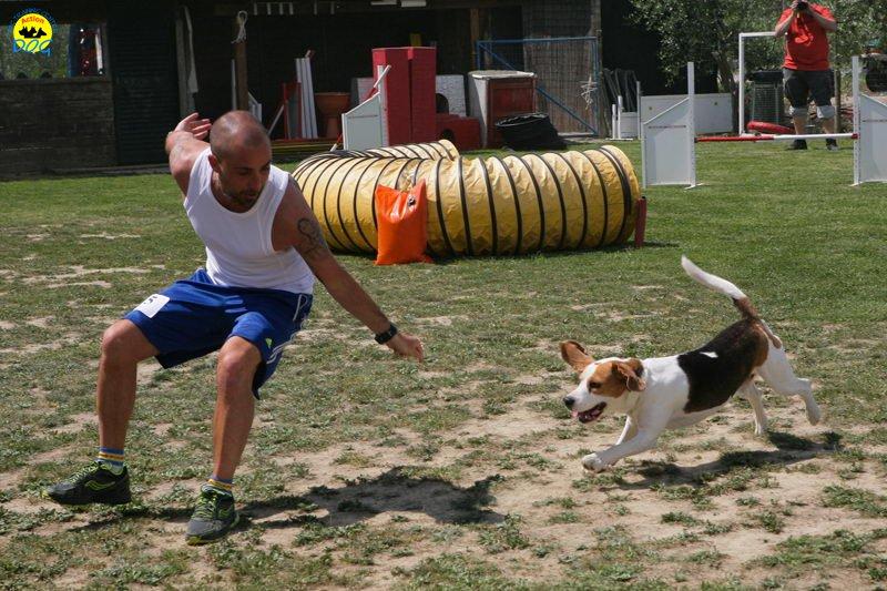 8-primo-trofeo-beagle-agility