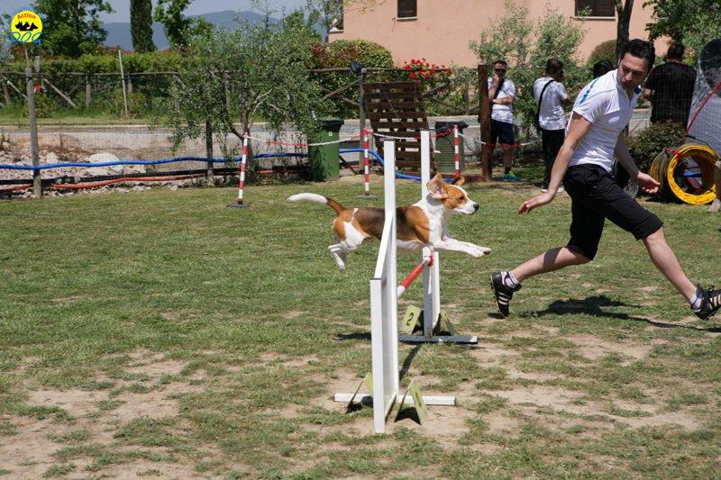 9-primo-trofeo-beagle-agility
