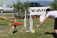 10-primo-trofeo-beagle-agility
