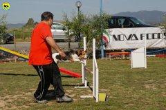 12-primo-trofeo-beagle-agility