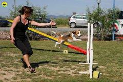 18-primo-trofeo-beagle-agility