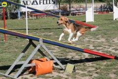 22-primo-trofeo-beagle-agility