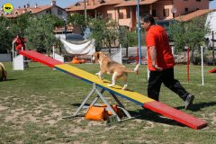 23-primo-trofeo-beagle-agility