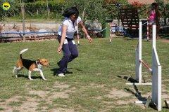 31-primo-trofeo-beagle-agility