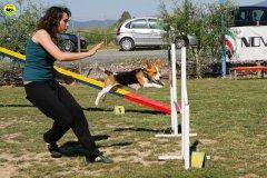 33-primo-trofeo-beagle-agility
