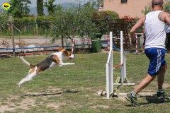 7-primo-trofeo-beagle-agility
