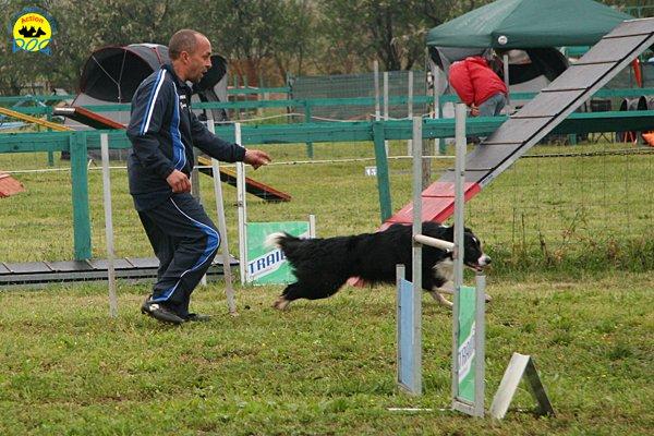 012-agility-dog-rosignano-02-05-2010