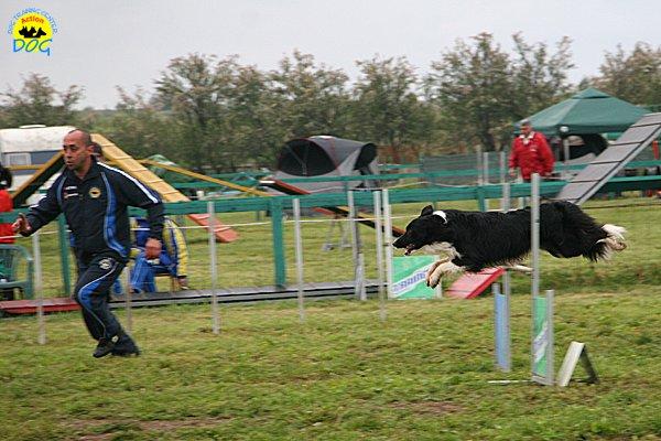 013-agility-dog-rosignano-02-05-2010
