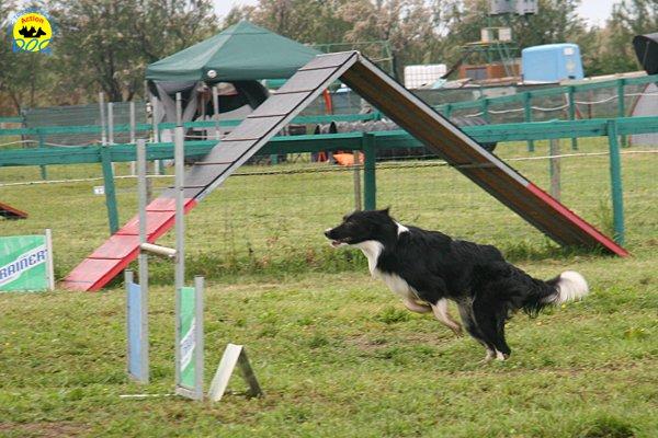 019-agility-dog-rosignano-02-05-2010