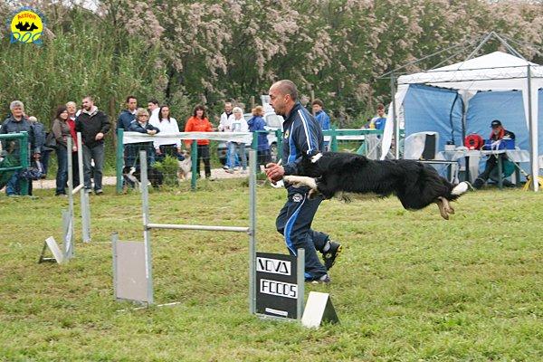 021-agility-dog-rosignano-02-05-2010