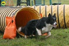 014-agility-dog-rosignano-02-05-2010