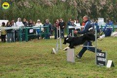 022-agility-dog-rosignano-02-05-2010