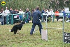 023-agility-dog-rosignano-02-05-2010