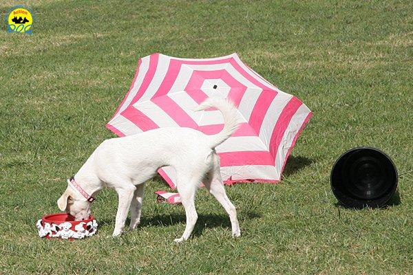 007-il-cane-impara-giocando-stage