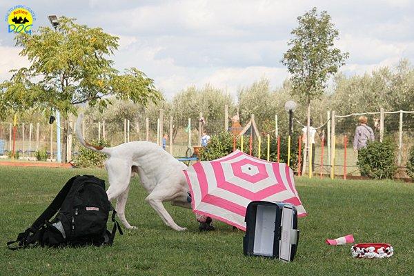 016-il-cane-impara-giocando-stage