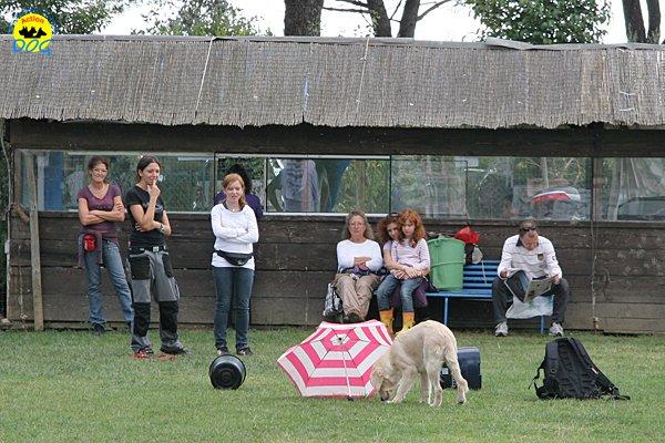 025-il-cane-impara-giocando-stage