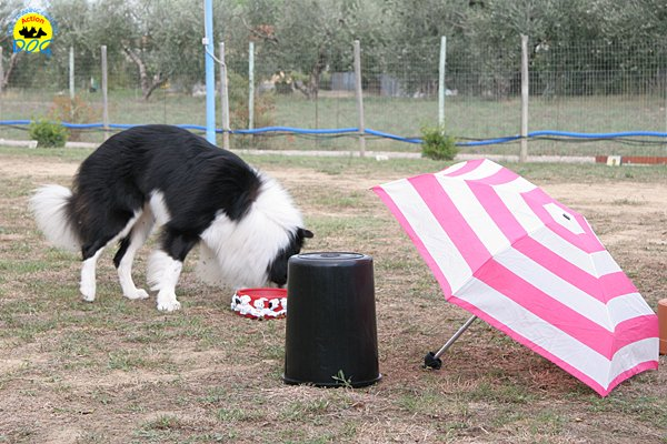 033-il-cane-impara-giocando-stage