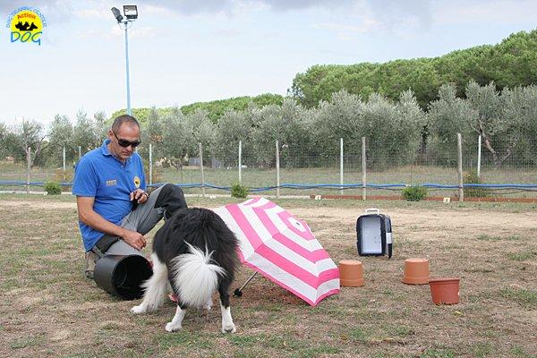 034-il-cane-impara-giocando-stage