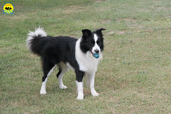 035-il-cane-impara-giocando-stage