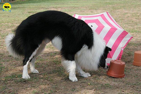 036-il-cane-impara-giocando-stage