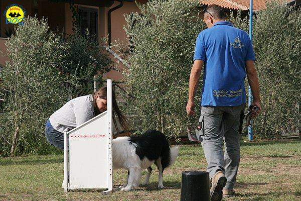 040-il-cane-impara-giocando-stage