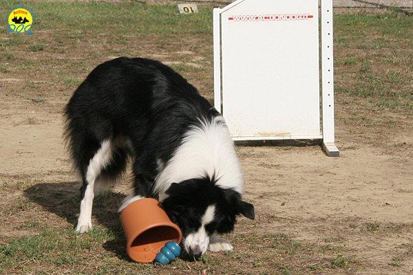 042-il-cane-impara-giocando-stage