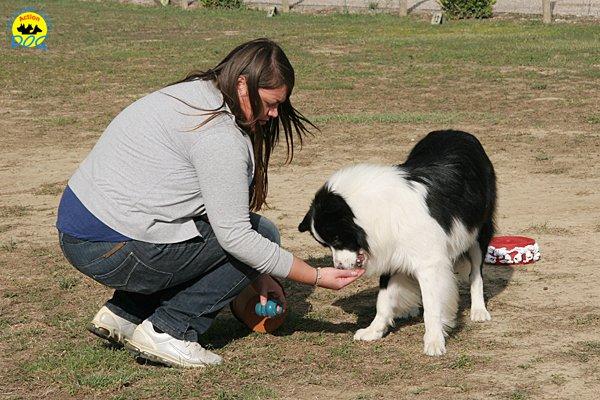 043-il-cane-impara-giocando-stage