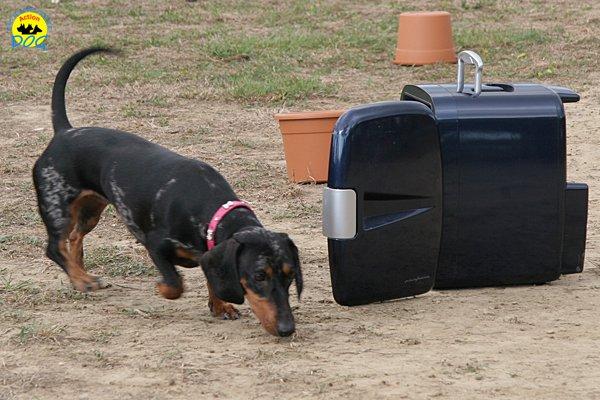 046-il-cane-impara-giocando-stage