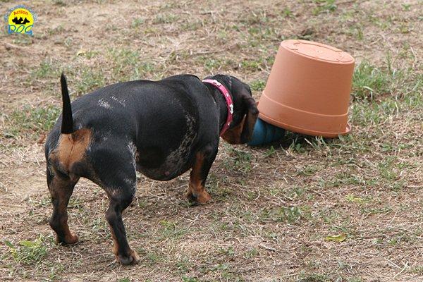 050-il-cane-impara-giocando-stage