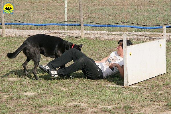 054-il-cane-impara-giocando-stage