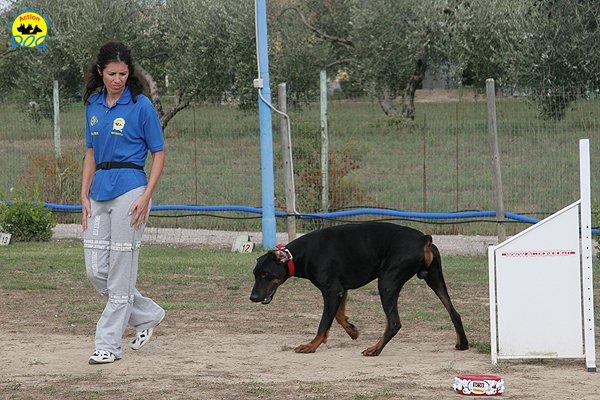 057-il-cane-impara-giocando-stage
