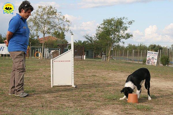 069-il-cane-impara-giocando-stage