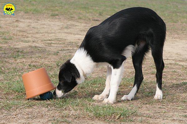 070-il-cane-impara-giocando-stage