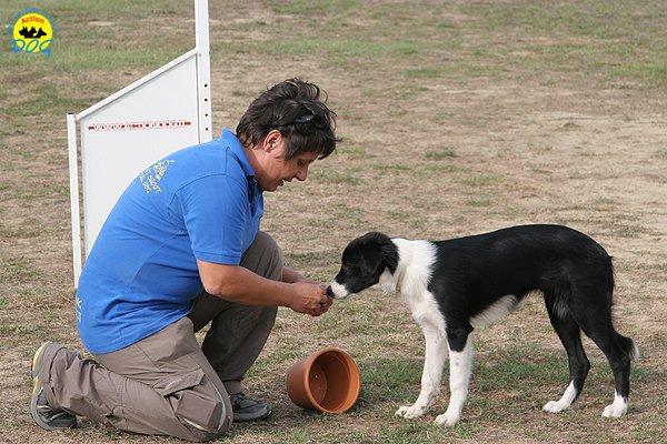 071-il-cane-impara-giocando-stage