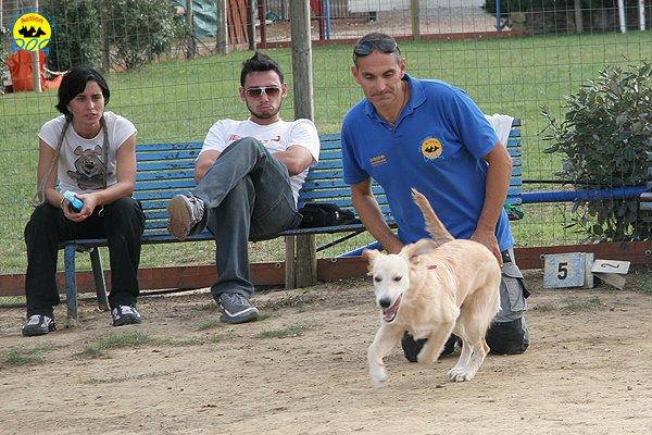 072-il-cane-impara-giocando-stage