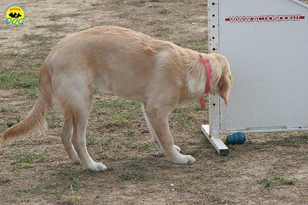 073-il-cane-impara-giocando-stage