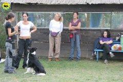 003-il-cane-impara-giocando-stage