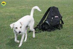 009-il-cane-impara-giocando-stage