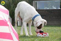 014-il-cane-impara-giocando-stage