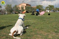 015-il-cane-impara-giocando-stage